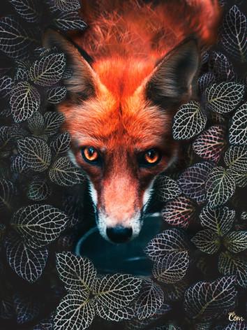 Fox Hidden