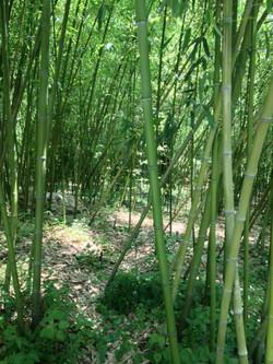 BambooPark_6.jpg