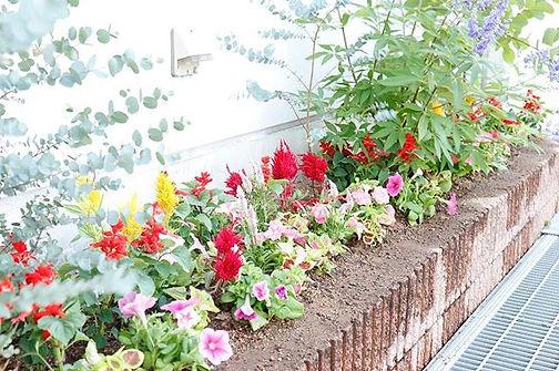 植物も衣替えの季節になりました♩ _今日は、企業様の花壇を春の花から夏の花へ植え
