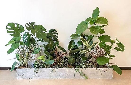 オフィスグリーン🌱 _観葉植物を使った企業様のエントランス_・_・_最近は、緑