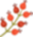 Bourgeons de fleurs