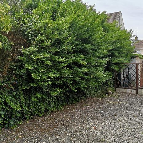 NA Garden Care , Portadown, Lurgan , Craigavon
