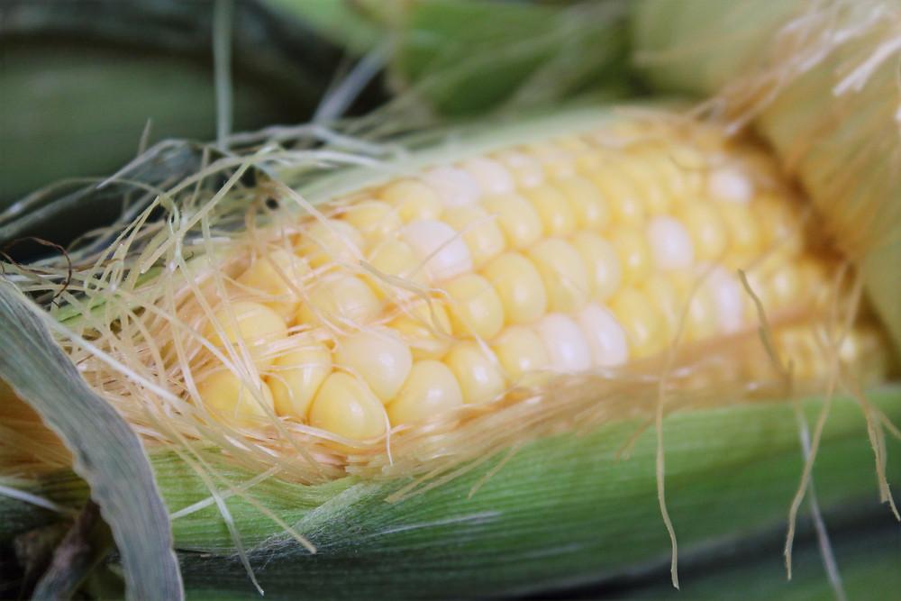 corn in a husk