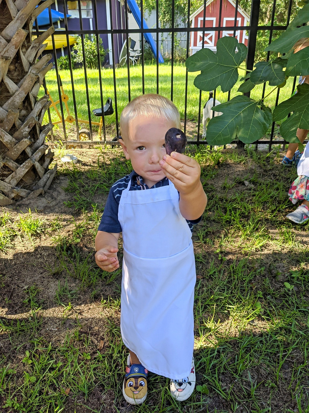 Young boy dressed in an apron holding a fresh fig