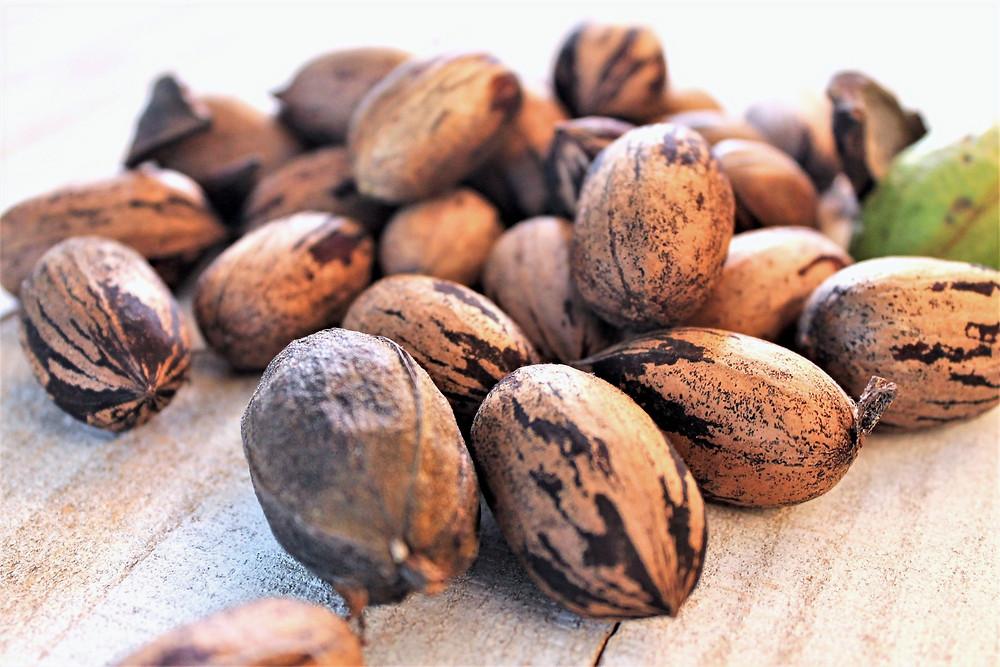 pecan nuts unshelled