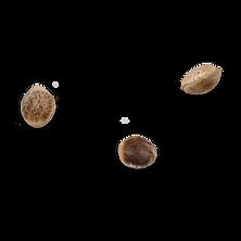 N85-seeds-toasted-hemp-seeds-shell-on-ma