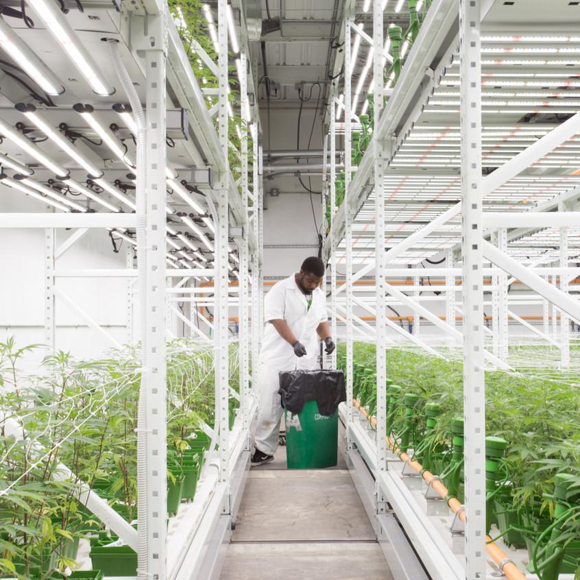 Cannabis grow facility