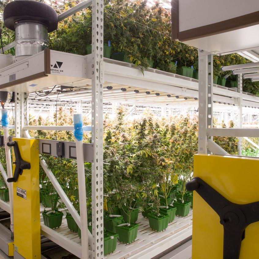 Cannabis grow facility design