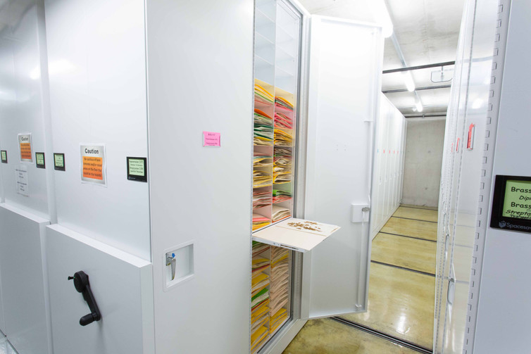 Cabinet storing botany samples with pull