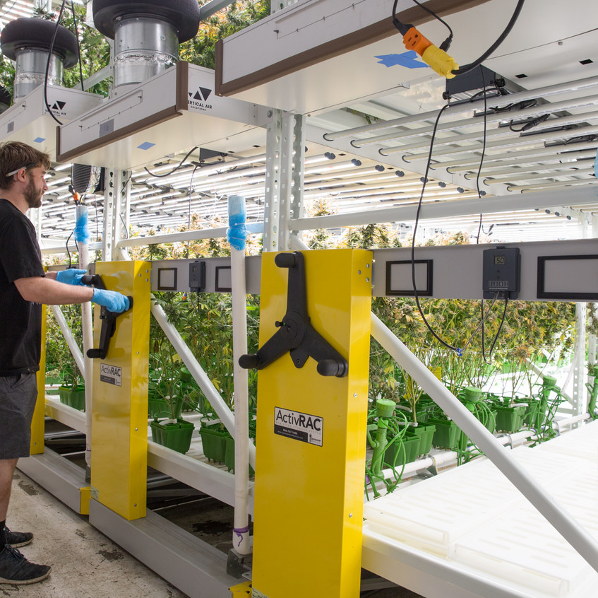 Cannabis farming on a strong reliable spacesaver ActivRAC