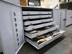 Ornithological Collection in Museum Cabi