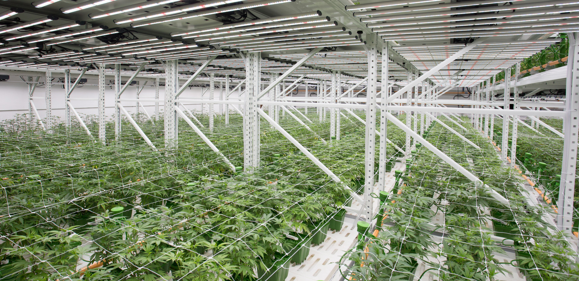 High-yield Indoor Cannabis Growing Syste