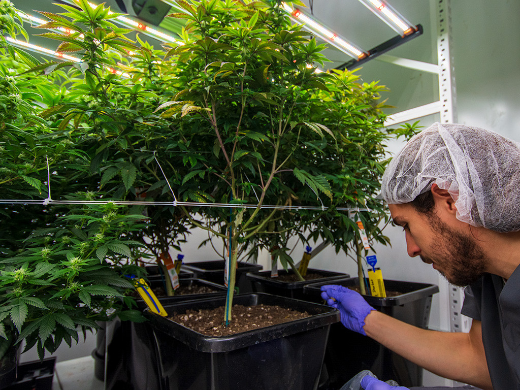 Medical Cannabis Commercial Grow Inspect