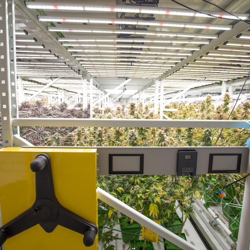 Cannabis farming facility