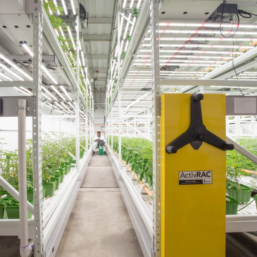Cannabis grow facility save space