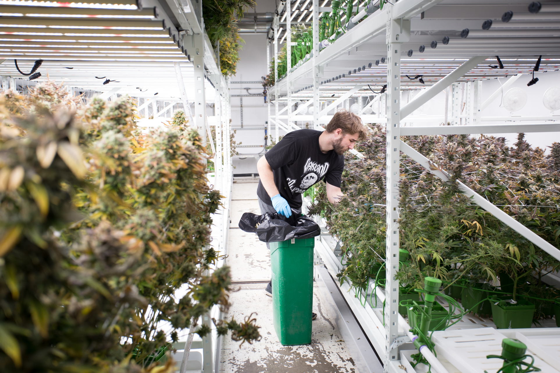 ActivRAC system optimizes space at cannabis grow facility