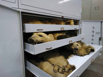 Zoological Collection in Museum Cabinet