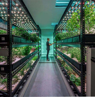 Growing Hydroponic Herbs in Manhattan