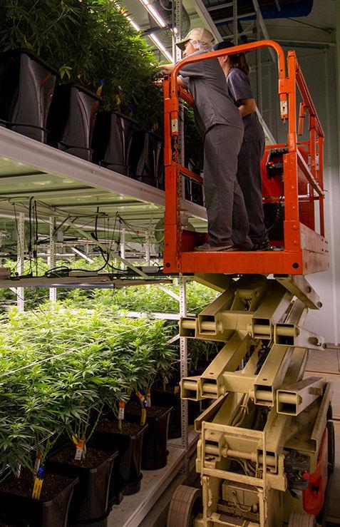 [Case Study] Medical Cannabis Cultivatio
