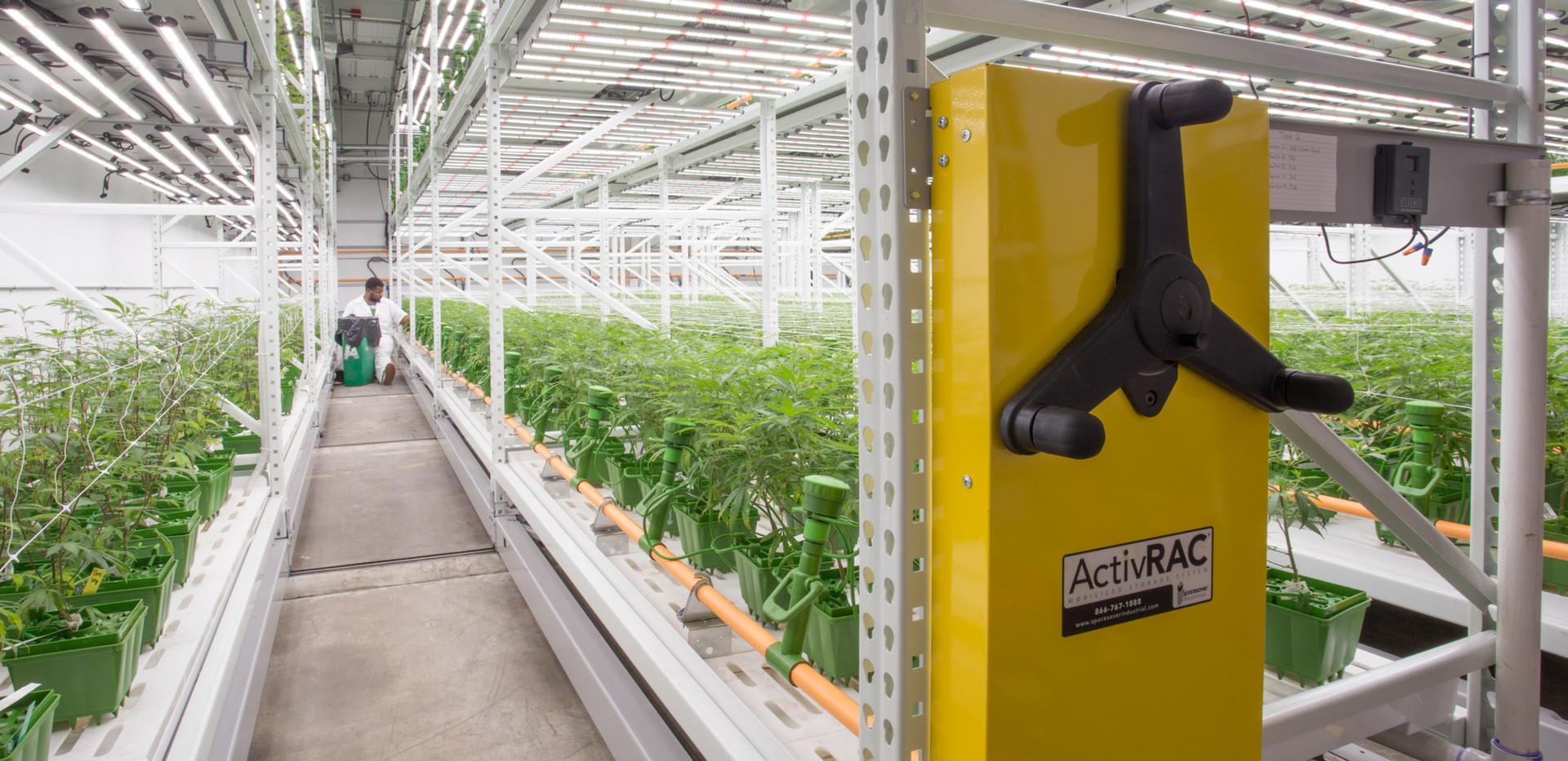 High-yield Cannabis Grow Facility Spaces