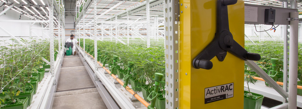 High-yield Cannabis Grow Facility Spaces