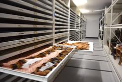 Museum Trays Civil War Artifact Storage