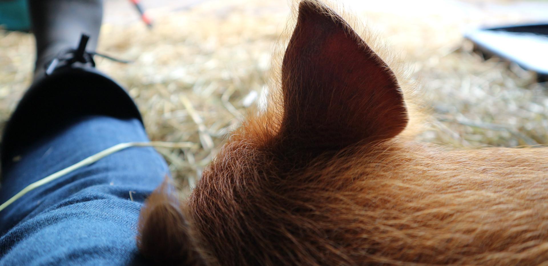 Genietmomentje... Ginger borg 8,5 week oud