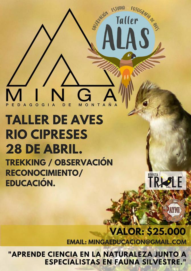 TALLER DE AVES RESERVA NACIONAL RÍO LOS CIPRESES 28 DE ABRIL 2018.