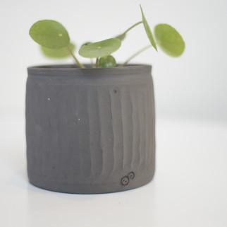 potje met pannenkoekenplant zwarte matte klei hoogte ongeveer 10 cm  prijs: 15 euro