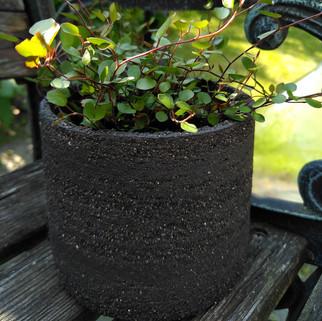 potje, zwarte groffe klei gevuld met plantje hoogte ca 11 cm  prijs: 12 euro