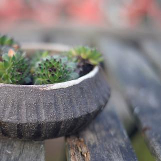 potje zwarte groffe klei met vetplantje geschikt voor buiten  prijs: 15 euro