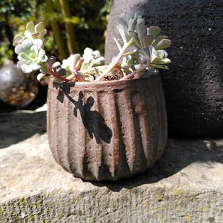 potje met plantje ruwe matte glazuur  prijs: 12 euro