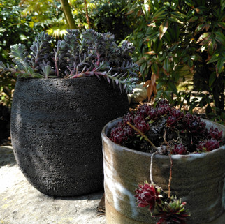 grote zwarte pot met plantje zwarte groffe klei  prijs: 30 euro