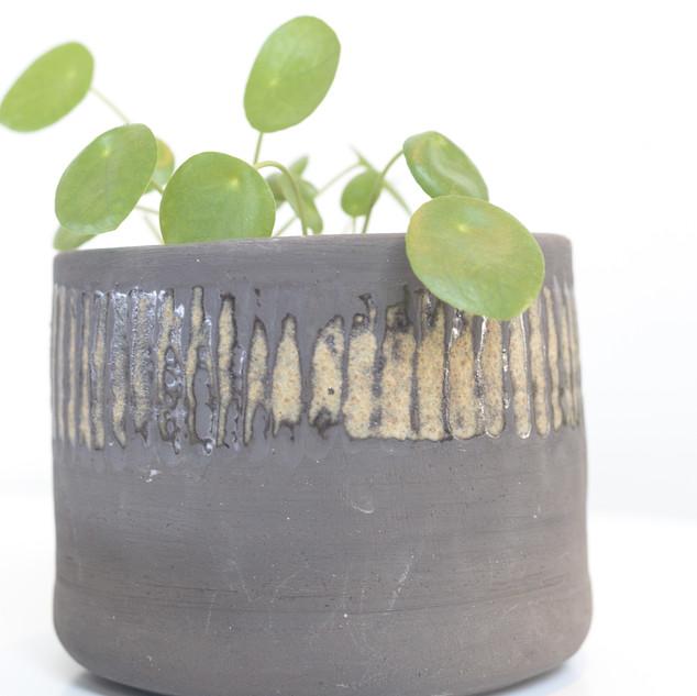 potje met pannenkoekenplant hoogte ca 11 cm  prijs: 20 euro