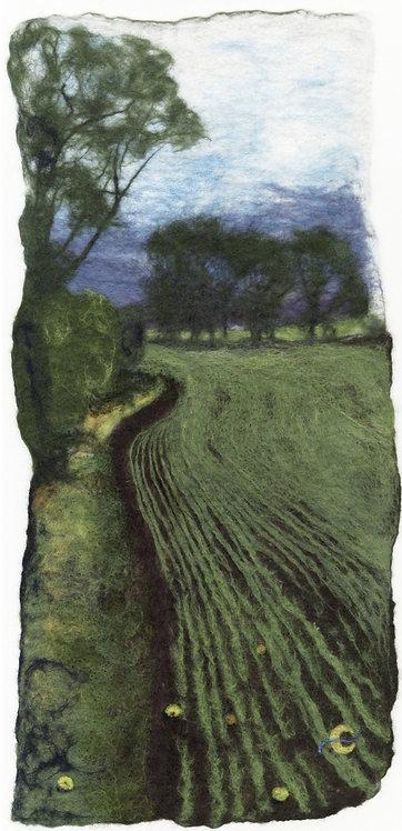 Winter Wheat & Apples (2014)