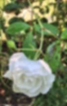 IMG_3335[11770].jpg