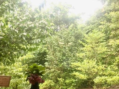 7/12『トランジションタウンを作ろう』meeting in 由良野の森
