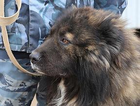 Услуги охраны в г.Ижевске и по Удмуртии с использованием служебных собак.
