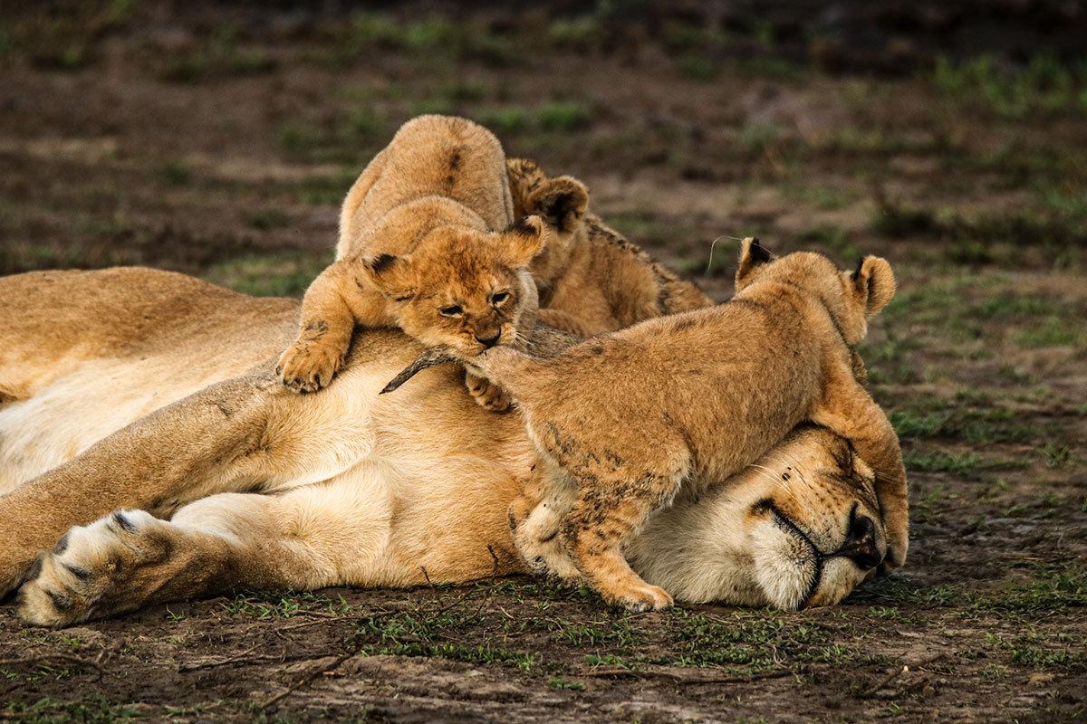 Family Game Safari