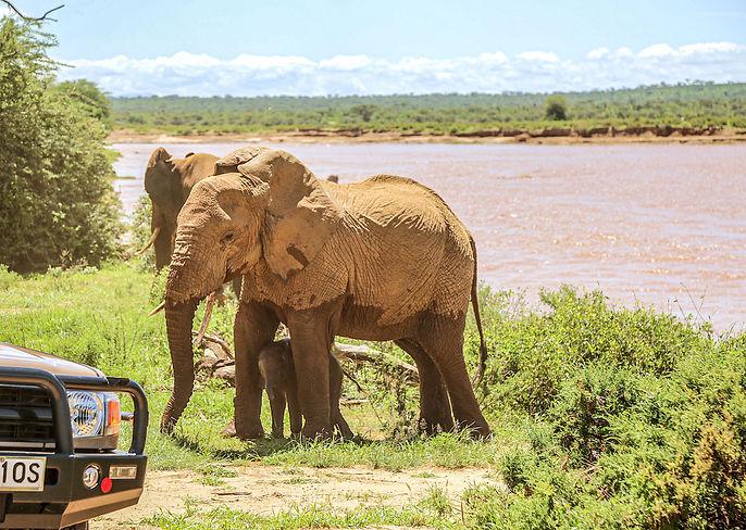 elephants_jeep_1.jpg