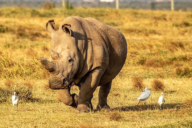 rhino_2.jpg