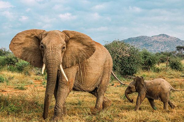 Safari Nature Walk