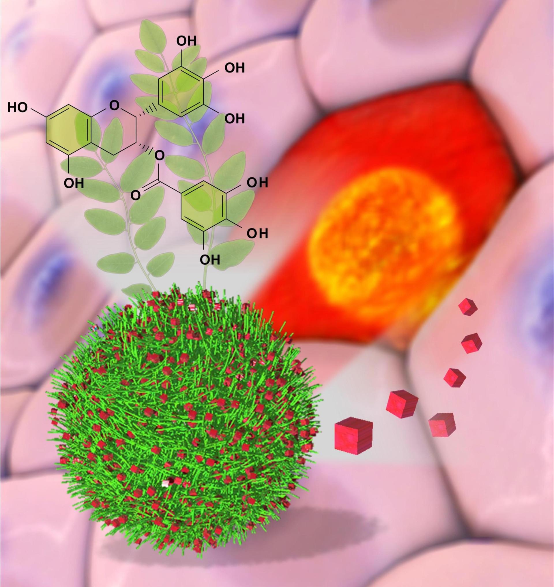 Bio-Nano Interface and Biomedical Engineering