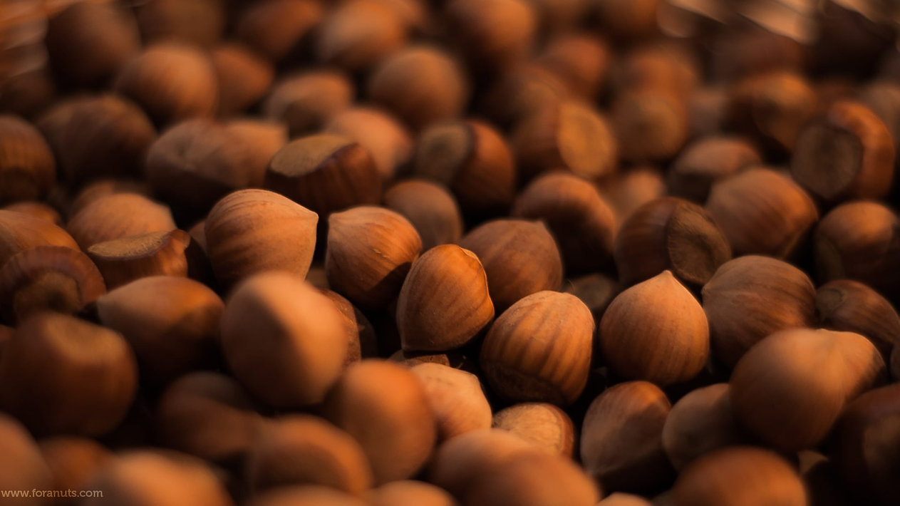 Hazelnuts wholesale.jpg