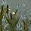 """Thumbnail: """"Flowers Gone Wild II"""""""