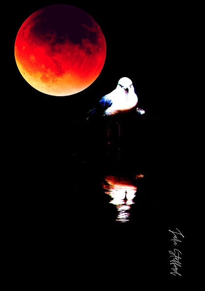 RED MOON SEAGULL REFLECTION.jpg