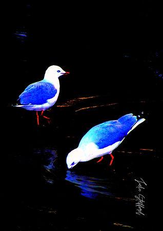 TWO BLUE SEAGULLS.jpg