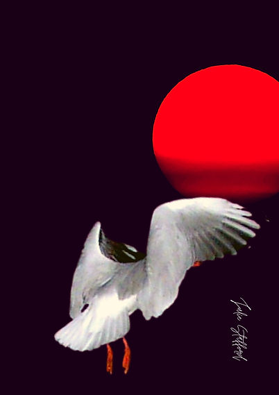 DEEP RED MOON SEAGULL ONE.jpg