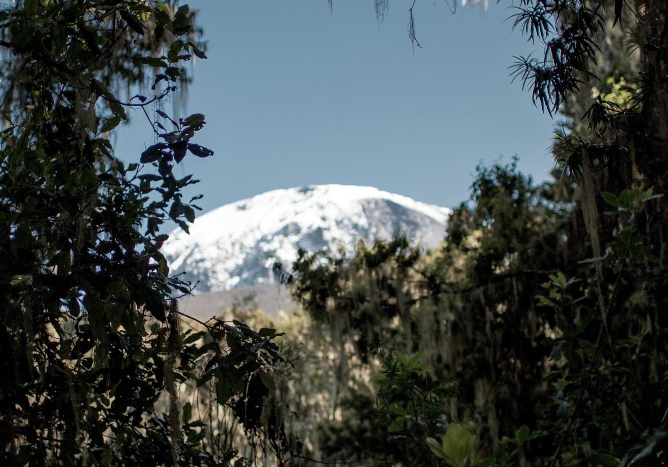 Uhuru peak through the rainforest