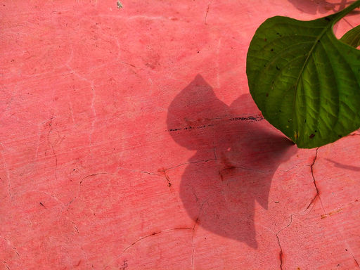Pink wall with shadow of green leaves..j